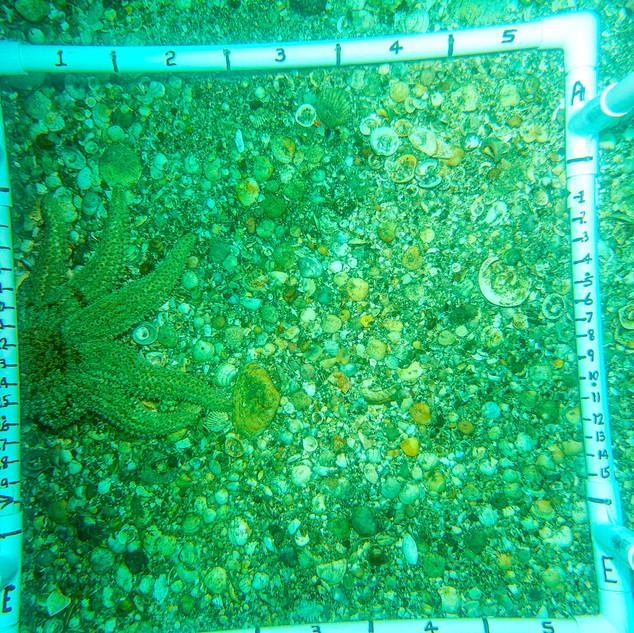 DSC00400%20starfish_LR.jpg