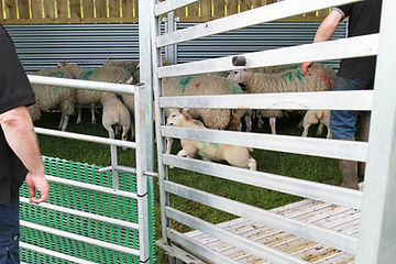 AGRI SHELTER SHEEP1.jpg