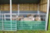 AGRI SHELTER SHEEP.jpg