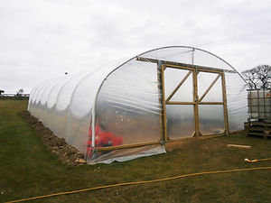 SINGLE SPAN POLYTUNNEL 2.jpg