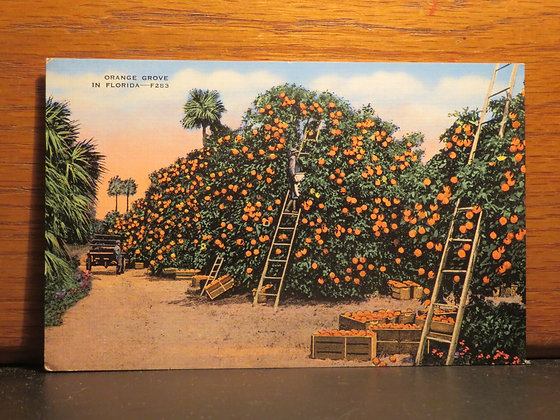 Orange Grove, Florida
