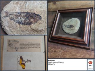 Fossil Fish $60