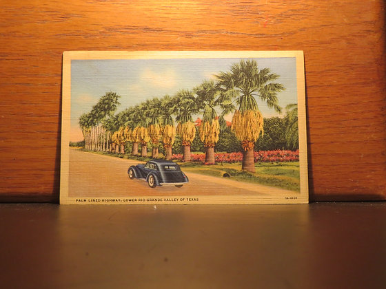 Palm Lined Highway, Lower Rio Grande Valley of Texas