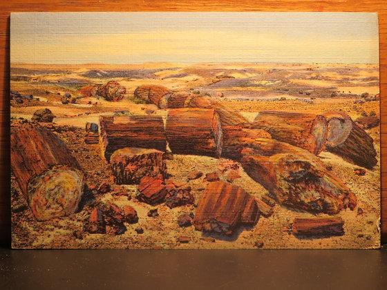 Cross Section of Petrified Logs, Petrified Forest, Arizona