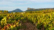 Pic Saint-Loup, nos vignes.jpg