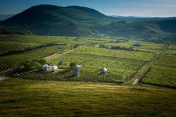 Vineyards of Eger