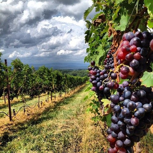 Taste the Eger wine culture