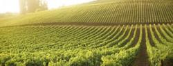 Eger Wineyards