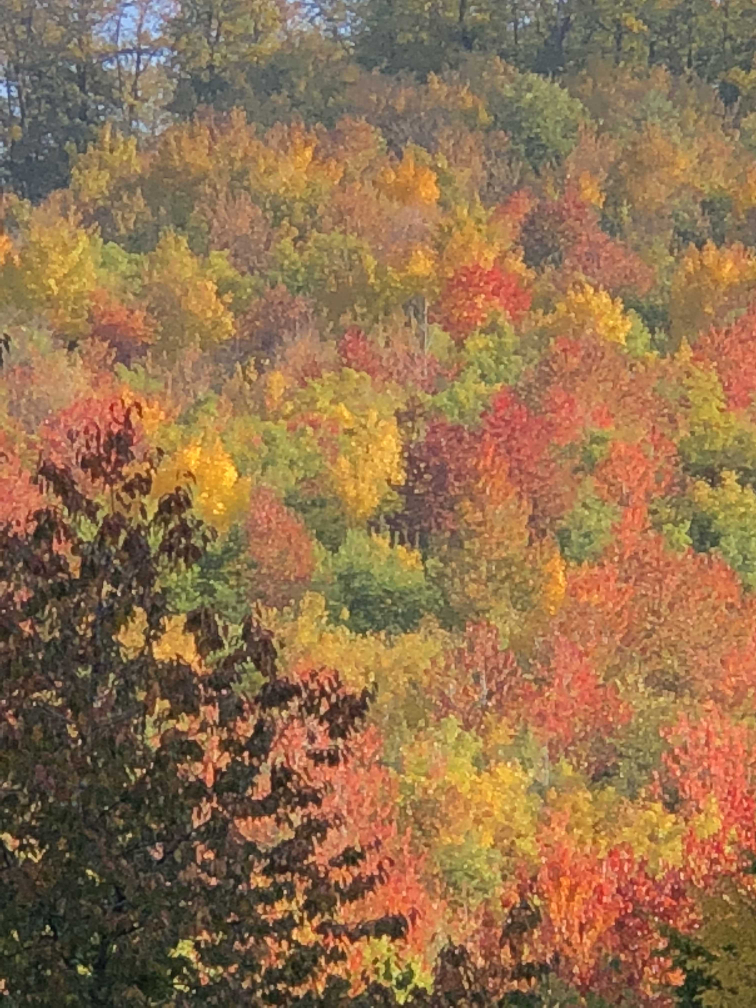 Colourful fall 2018 - Bükk Mountains