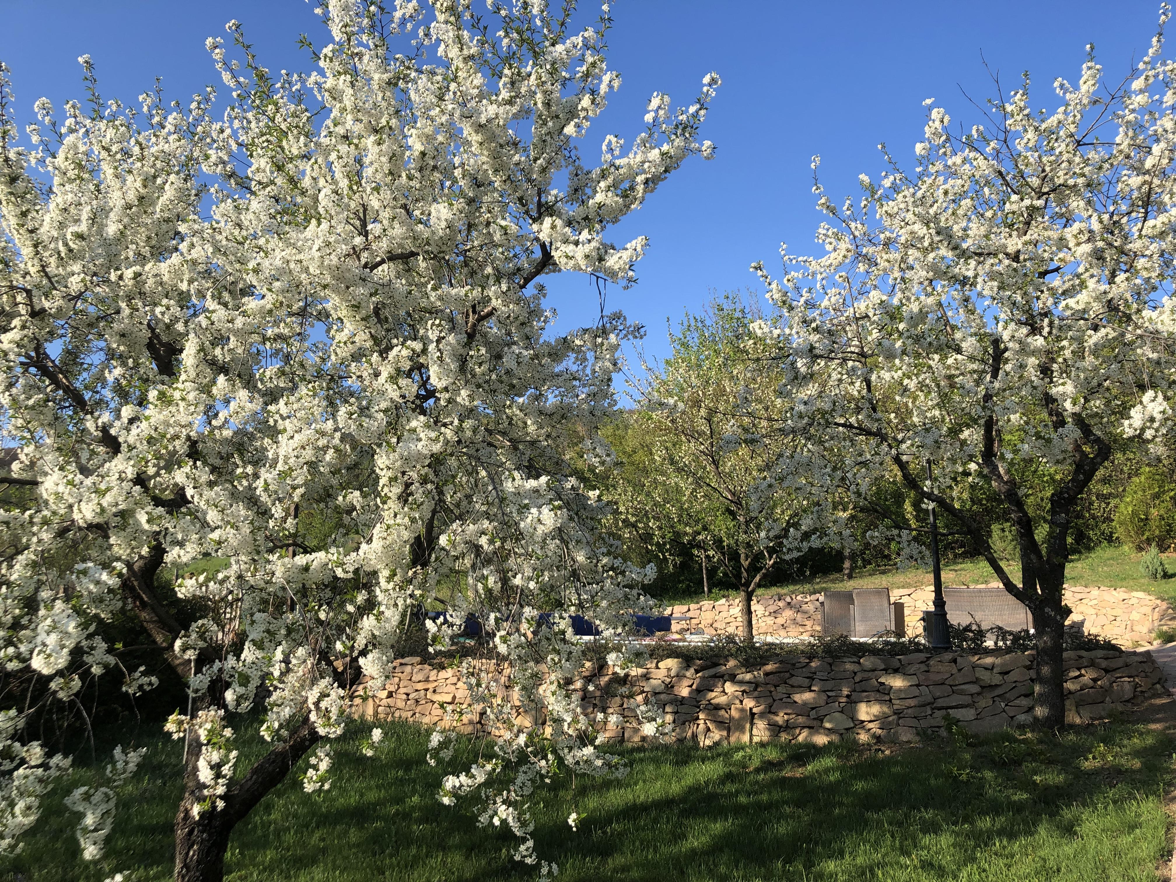 Spring 2019 - Garden of Bell House