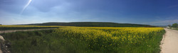 Blooming rape field over Bükkzsérc