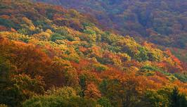 B_Bükk színei ősszel.jpg