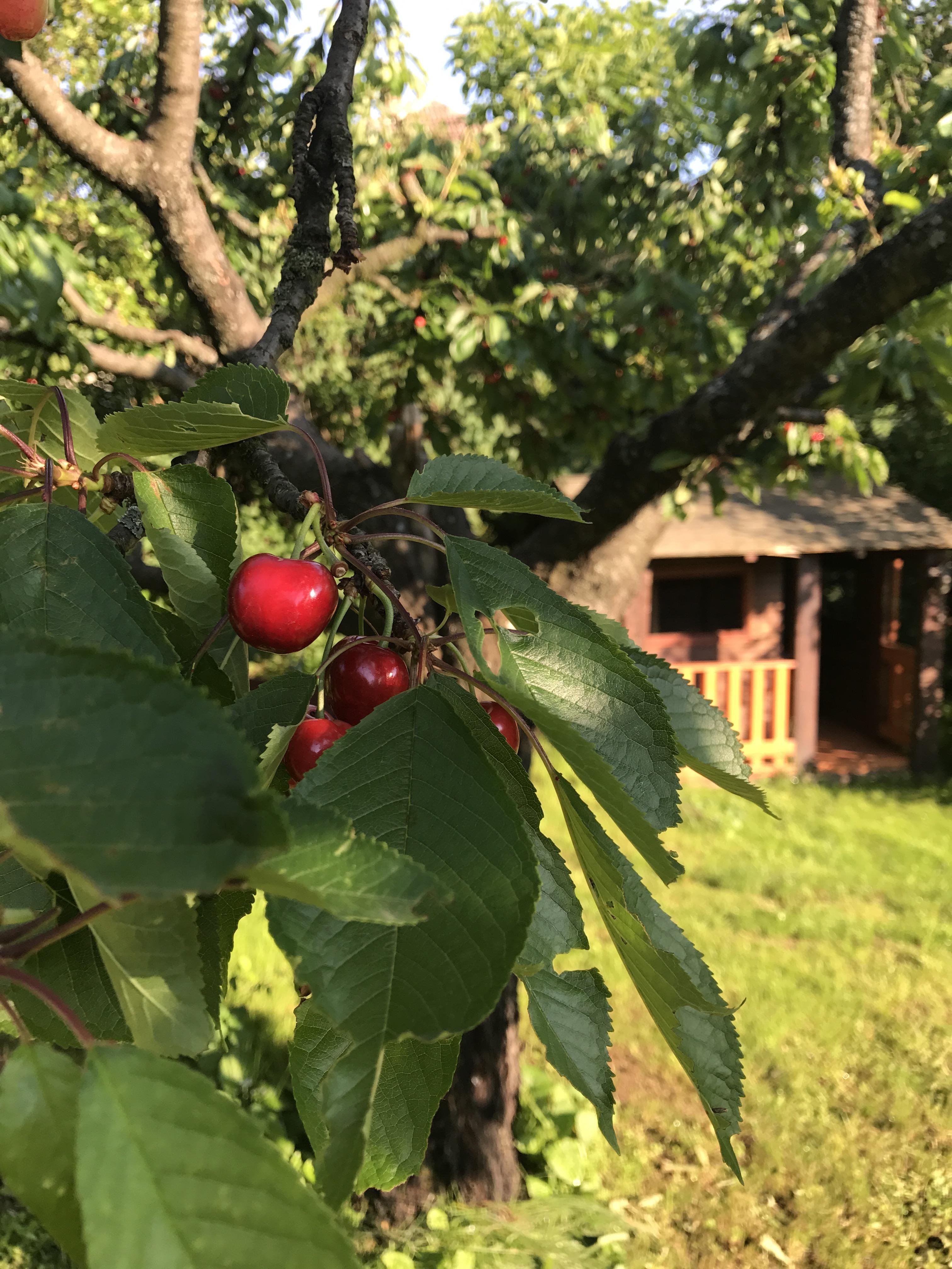 Summer 2018 - Garden Bell House