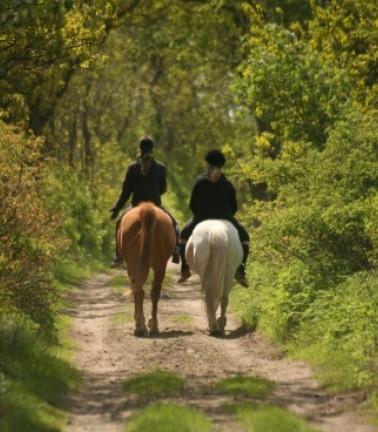 Horseriding6.jpg