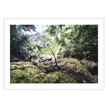 Baby Palm In Forest | Ivan Sarenas