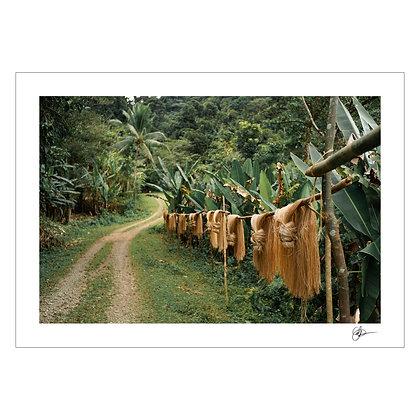 ABACA FOREST | Carmen Del Prado