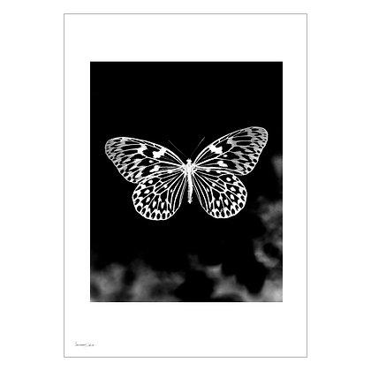 Dreamlike 010 | Lancer