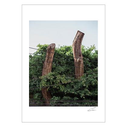 CHOPPED TREE & POWER LINES   Gio Panlilio