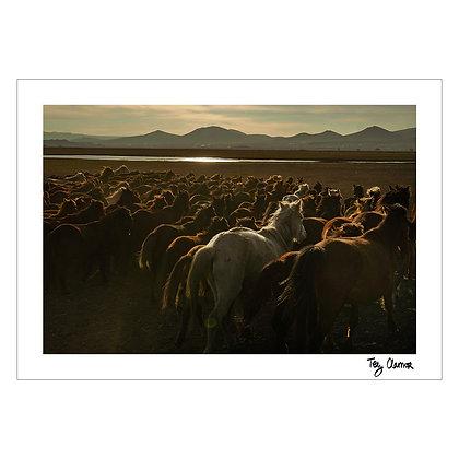 THE LAND OF BEAUTIFUL HORSES | Tey Clamor