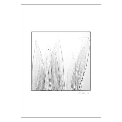 Untitled 2 | Jason Quibilan