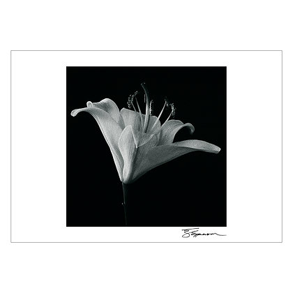 Flower study 1 | Tom Epperson