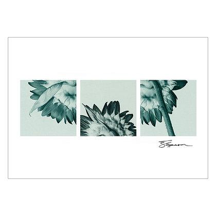 Sunflower triptych   Tom Epperson