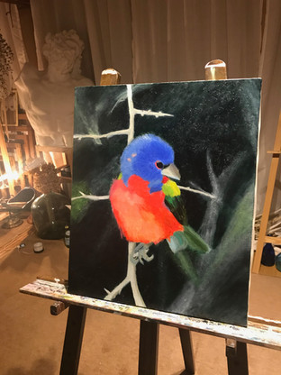 Draw_bird