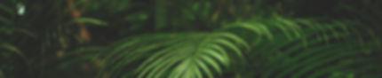 environment-fern-iphone-wallpaper-114179