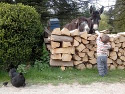 Les ânes, les poussins, les enfants