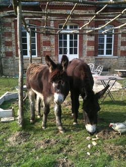 Les ânes en terrasse