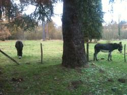 L'enclos des ânes à La Bourbelle