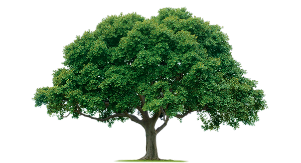 Download-Tree-PNG-Photos.png