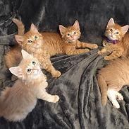 Concern for Animals CFA volunteering community service washington WA olympia lacey shelton tumwater