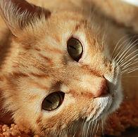 Concern for Animals CFA Cat Dog Kitten Spay Neuter Fix Veterinary Cost Vet Animal Welfare Pet Animal