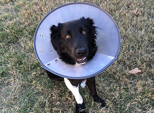 Concern for Animals CFA Dog Veterinary Cost Vet Animal Welfare Pet Animal