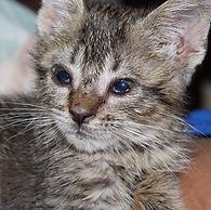 Concern for Animals CFA Dog Cat Rabbit Guinea Pig Lizard Gecko Beardie Budgie Bird Veterinary Cost Vet Animal Welfare Pet Animal Assistance Voucher Help