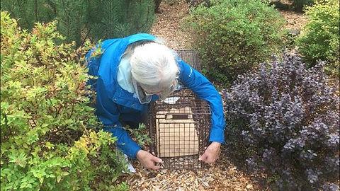 Concern for Animals CFA Feral Cats Rescue TNR trap neuter release spay