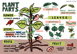 Plant Parts (Completed).png