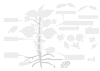 Plant Parts (Template).png