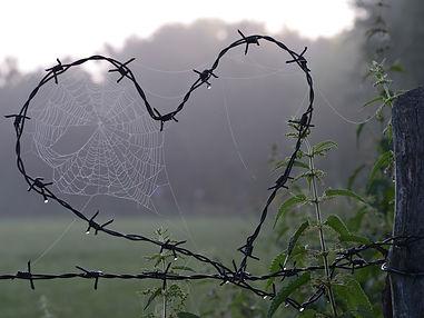 cobweb-1949778_1920.jpg