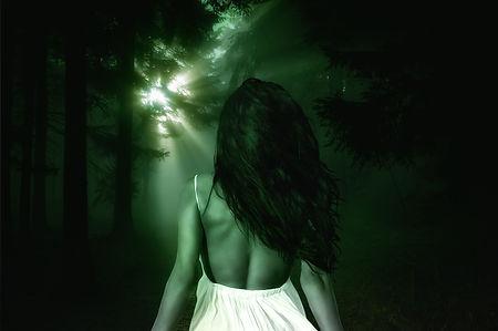 forest-3885329_1920.jpg