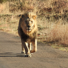 22122019 Rob Lion on Drive.jpg