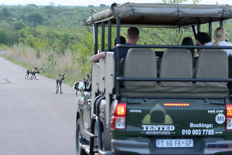 Adventure_Tents_Pretoriuskop-19.jpg