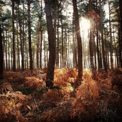 new-forest-woods-photography-apulina