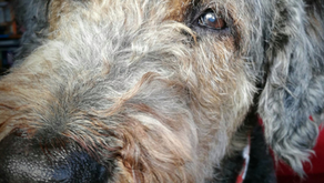 Needle felt Pet portraits of Mack