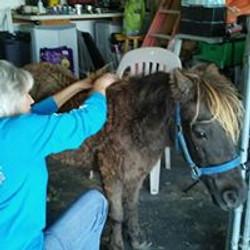 Day Six little horse
