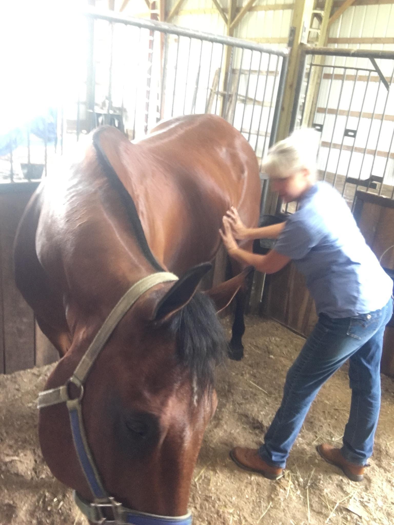 equine Dale