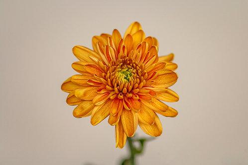 Rossano Orange