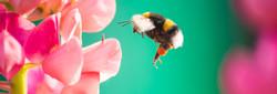 Bee in the garden