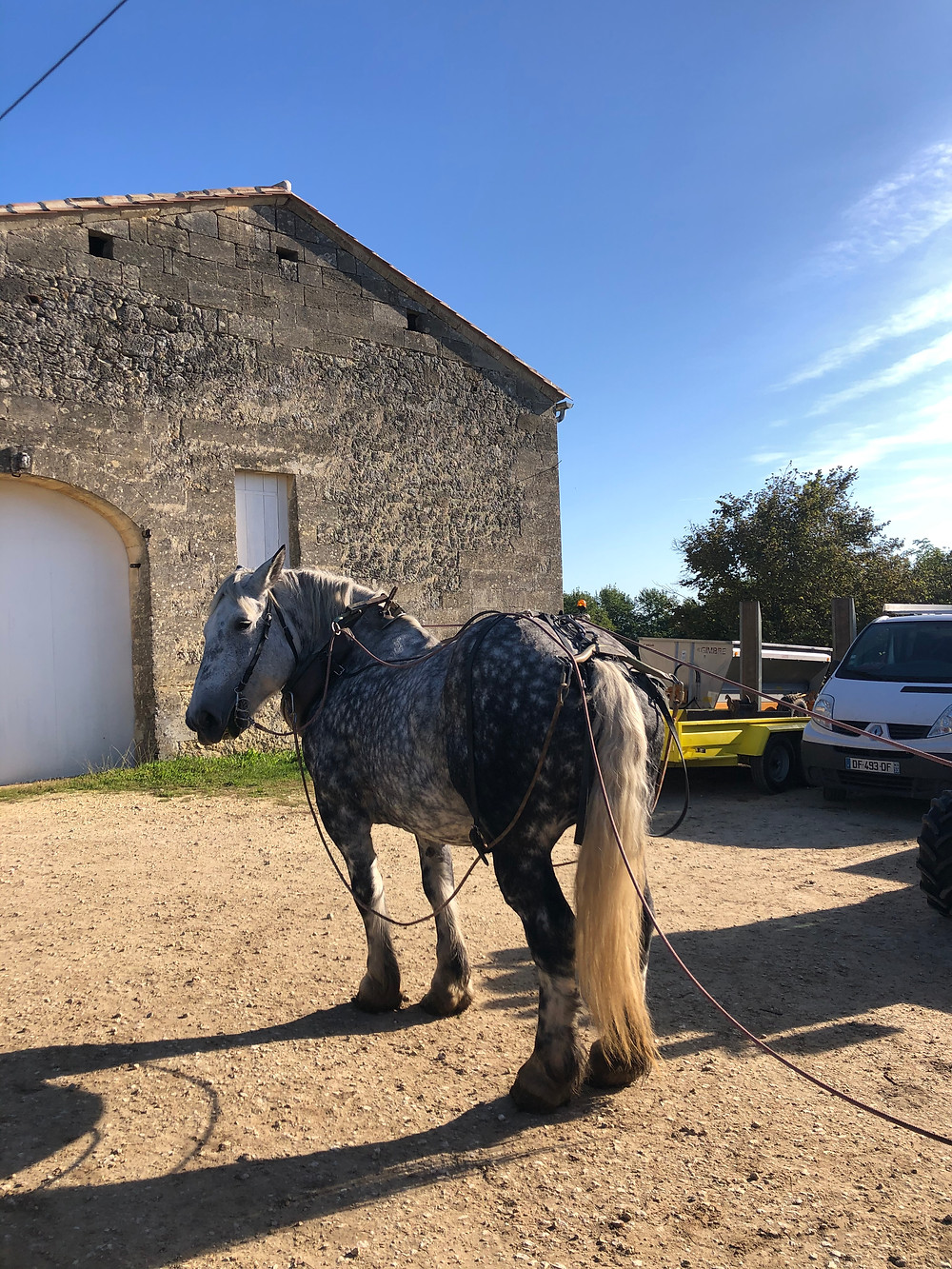 horses in biodynamic winery in Bordeaux in Chateau Le Puy